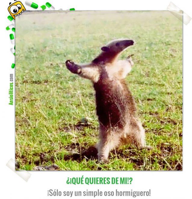 Chiste de animales: Oso hormiguero